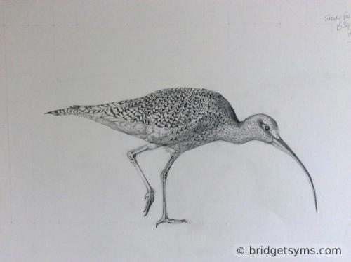 Drawing of a bird
