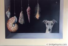 Whippets with Shells