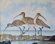 curlews beach seashore trio